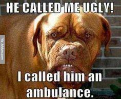 He called me ugly - dog meme