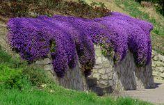 ŻAGWIN PASKOWANY---------- fioletowe poduchy (4278372552) - Allegro.pl - Więcej niż aukcje.