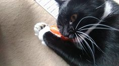 Thank you cat hampurr, this is the freaky fish toy, Oswald loved it so much he tried to eat it