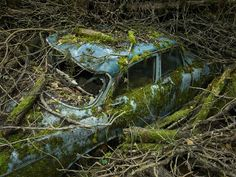 Abandoned antique car reclaimed by nature