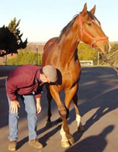 Is Your Horse a Wobbler? Signs & Symptoms of Equine Wobbler's Syndrome