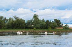 Delta Dunării, raiul de la capătul României – GALERIE FOTO : Europa FM