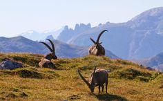 Das Hagengebirge in Unter unserem Himmel im Bayerischen Fernsehen - Berchtesgadener Land Blog
