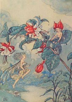 Harold Gaze Fairys