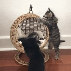 Cat GIF Central — Kittens