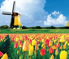 Amesterdam, Holland.  Windmills and tulips as far as the eye could see.  It blew me away!