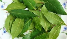 Bay Leaves are terrific for spells cast to bring victory in athletic competition. Bay Leaves also removes negative energy, protects health and gives an impetus to careers and matters of the heart. Health Remedies, Home Remedies, Chest Infection, Art Rose, Laurel Leaves, Varicose Veins, Natural Treatments, Natural Cures, Garden Types