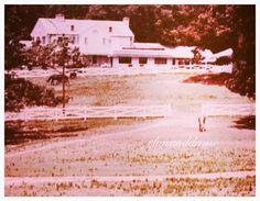 Back view of a Graceland - Elvis never left