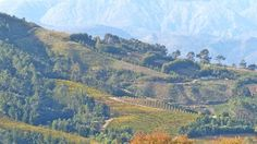 Delaire Graff Wine Estate Online Tickets, Cape Town, Trip Advisor, Grand Canyon, Westerns, Wine, Mountains, Photos, Travel