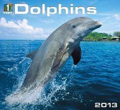 Dolphins 2013 Calendar
