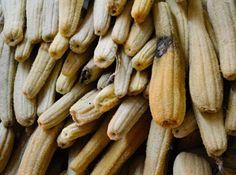 La spugna naturale classica per l'igiene torna all ribalta anche in versione vegetale, grazie ala luffa e ai suoi caratteristici frutti, anche nel mondo del design.