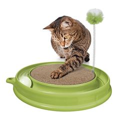 #Cats #CatHarnesses #CatLeashes #CatMuzzles #CatIDTagsCollarAccessories  #CatCratesKennels #CatcatHouses #CatKennelCovers