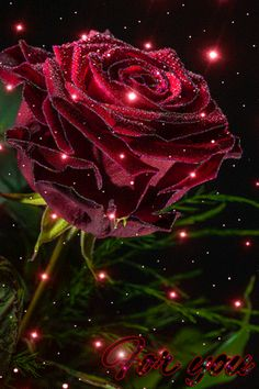 An animated gif. Make your own gifs with our Animated Gif Maker. Beautiful Flowers Wallpapers, Beautiful Rose Flowers, Pretty Flowers, Rose Flower Wallpaper, Flowers Gif, Beautiful Love Pictures, Beautiful Gif, Gif Bonito, Rose Images