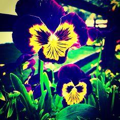Colors Finding Yourself, Colors, Plants, Travel, Viajes, Colour, Planters, Trips, Traveling