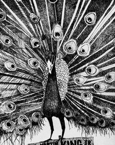 """The Peacock"" by Jon Stich"