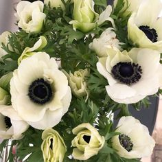 Most recent Pic Ranunculus growing Suggestions Awareness Most Cut-Flower Enthusiasts! If you're an cut-flower lover—and who's definitely not? Ranunculus Garden, Flower Garden, Flower Farm, Planting Flowers, Ranunculus Flowers, Anemone Flower, Beautiful Flowers, Anemone, Flower Lover