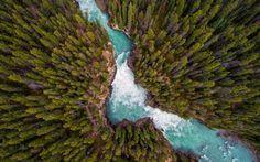 Deep forest river wallpaper