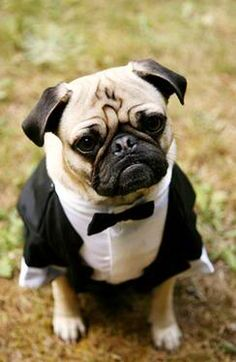Handsome dog in his wedding tuxedo. Chandler will wear a tux at my wedding.