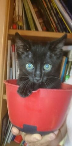Unsere Katzenmutter Paula hat vor 8 Wochen ein kleines Kätzchen bekommen.Wir haben Ihn vorerst Paulchen genannt.Paulchen hat blaue Kuller Augen.Paulchen ist stubenrein, ganz lieb und verspielt.Schmust gern ,trinkt Milch . Seine Lieblindsspeise istLeberkäse und abgekochtes Fleisch.Paulchen wird in den nächsten Tagen geimpft und bekommteine Wurmkur.Sie können Paulchen auch einen neuen namen geben.Das ist gar kein Problem.Er ist mit seiner Katzenmutti Paula auch schon mal draußen gewesen. Da…