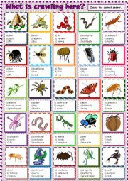 What is crawling here? List Of Insects, Insects Names, Vocabulary Worksheets