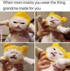 Trendy Ideas Funny Memes Hilarious So True Kitty Super Funny Memes, Funny Animal Memes, Funny Animals, Funny Quotes, Pet Quotes, Baby Quotes, Jokes Quotes, Animals Images, Hilarious Memes