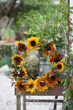 5 x solroskul Red Geraniums, Autumn Wreaths, Spring Wreaths, Sunflower Wreaths, Autumn Inspiration, Autumn Home, Daffodils, Door Wreaths, Flower Power