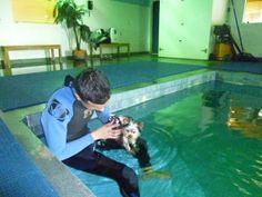 A Puppy Swimming Lesson!