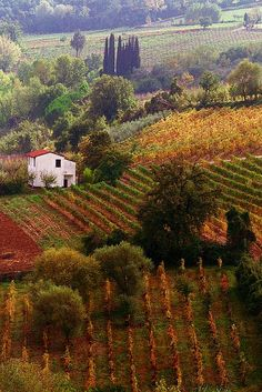 Autumn harvest in Tuscany, Italy.