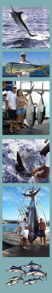 Deep sea fishing in Maui, Hawaii
