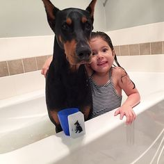 51 New Ideas funny dogs mems doberman Funny Dog Jokes, Funny Memes About Girls, Cute Funny Dogs, Funny Quotes, Cutie And The Beast, Dog Mems, Funny Baby Photography, Scary Dogs, Doberman Love
