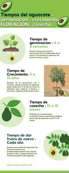 100 Ideas De Plantas Y Frutos En 2021 Plantas Cultivo De Plantas árbol De Aguacate