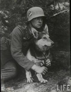 German infantryman of the interwar Reichswehr with his German Shepherd war dog. The German army had a long tradition of K-9 units mostly serving as pioneers and pathfinders. War dogs were also extensively deployed in searching for wounded, sniff explosives, and used as runners.