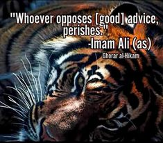 Tiger Quotes, Imam Ali Quotes, Hazrat Ali, Heartfelt Quotes, Islamic Quotes, Animals Beautiful, Ya Ali, Wisdom, Qoutes