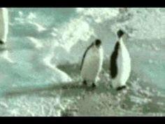 Popular   Biolove.ru Пингвины выясняют отношения )
