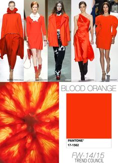 BLOOD-ORANGE fall winter 2014 15 colour trend