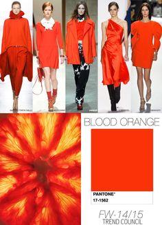 BLOOD-ORANGE fall winter 2014 15 colour trend