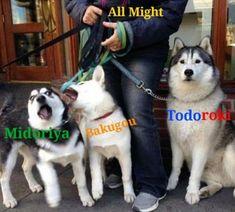 memes // Midoriya // Bakugou // Todoroki // All Might // My hero academia Anime Meme, Funny Anime Pics, Cute Anime Guys, Otaku Anime, Boku No Hero Academia Funny, My Hero Academia Shouto, My Hero Academia Episodes, Hero Academia Characters, Meme Comics