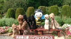 Special poodle meeting2 スペシャルとはの画像   犬親分☆