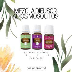❋ Mezcla para difusor: adiós mosquitos Doterra Allergies, Young Living Kids, Young Essential Oils, Esential Oils, Yl Oils, Living Oils, Diffuser Blends, Tips, Aromatherapy