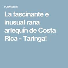 La fascinante e inusual rana arlequín de Costa Rica - Taringa!
