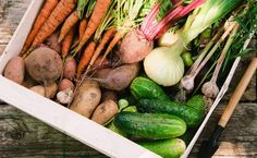 Dear Modern Farmer: I've been growing fruits and veggies for my family, but would like to start selling farm shares through a CSA. How do I get started?  good to know