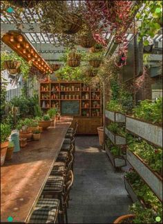 Magnificent Small Urban Garden Ideas You'll Want For Your Living Space - HomelySmart - Garden Care, Garden Design and Gardening Supplies Patio Design, Garden Design, House Design, The Grounds Of Alexandria, Backyard Greenhouse, Greenhouse Ideas, Small Greenhouse, Potting Sheds, Shed Plans