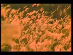 HEART LAND KUMAMOTO (English)