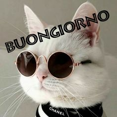 Buongiorno nuove immagini gratis per Facebook e WhatsApp ⋆ Toghigi♥Paper Crazy Cat Lady, Crazy Cats, Funny Cat Videos, Funny Cats, Animals And Pets, Funny Animals, Italian Memes, Good Morning Quotes, Funny Animal Pictures