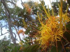 Flores da Serra. Macaúbas, BA.