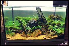 Star Wars Themed Fish Tanks/Vivariums Are The Newest Trend Cool Fish Tanks, Saltwater Fish Tanks, Aquarium Fish Tank, Aquariums, Lizard Tank, Fish Tank Themes, Fish Tank Design, Aquarium Landscape, Shrimp Tank