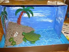 green sea turtle diorama - Google Search