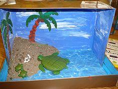 green sea turtle diorama - Google Search