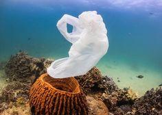 Chaque année, 8 millions de tonnes de déchets de matière plastique atteignent…