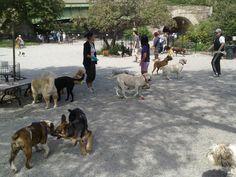 nyc dog runs - Google Search Dog Runs, Nyc, Running, Park, Google Search, Dogs, Animals, Animales, Animaux